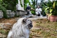 imola, monte mauro, la gatta dell'eremita, oggi  :)  (fullscreen)