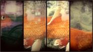 digital split cam</p> <p>[img]http://www.micromosso.com/immagini/staff.jpg[/img]