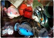 visto che non riesco a vederli nell&#39;acquario di Genova:-)</p> <p>full</p> <p>[img]http://www.micromosso.com/immagini/staff.jpg[/img]