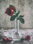 buona serata a tutti.....</p> <p>[img]http://www.micromosso.com/immagini/staff.jpg[/img]