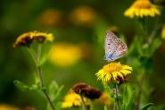 Il segreto non è prendersi cura delle farfalle,<br /> ma prendersi cura del giardino,<br /> affinche le farfalle vengano da te</p> <p>-M. Quintana-<br /> [img]http://www.micromosso.com/immagini/staff.jpg[/img]</p> <p>Full, se vi va ...