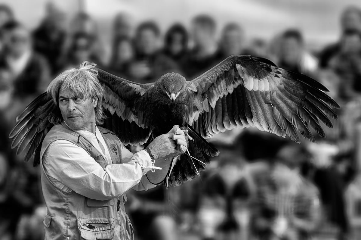 storie di falconeria