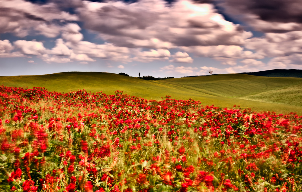 tuscany in red
