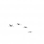 attitude, nel senso di attitudine, ma anche di assetto di volo ...</p> <p>buon tutto a tutti<br /> T<br /> [img]http://www.micromosso.com/immagini/staff.jpg[/img]
